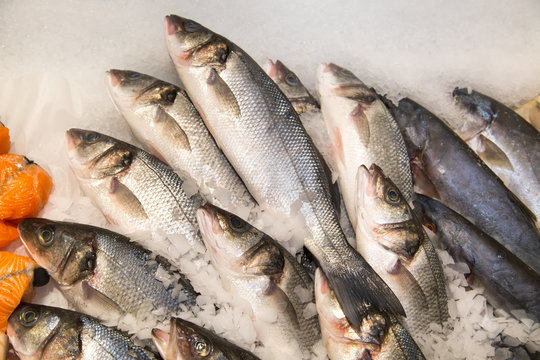 Yellowtail fish chilled on a background of white ice. Seafood, fish, useful products.
