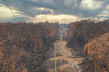 Electrical transmission lines amongst severely burnt Eucalyptus trees after a bushfire in The Blue Mountains