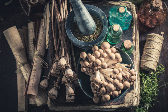 Unique herbalist laboratory with herbs and mushrooms
