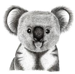 koala hand draw illustration, isolated on white background