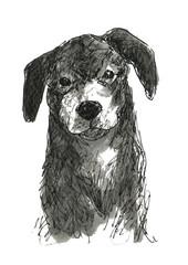 垂れ耳の犬