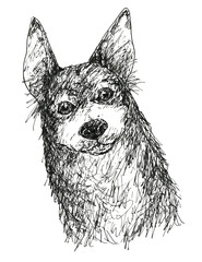 目の大きな小型犬