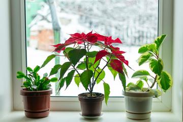 flowers on the windowsill in winter