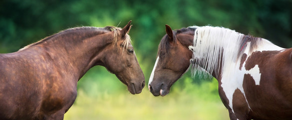 Two horse pinto and Silver dapple close up portrait Papier Peint