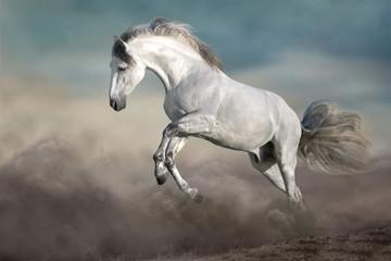 Wall Mural - White Horse free run on desert dust