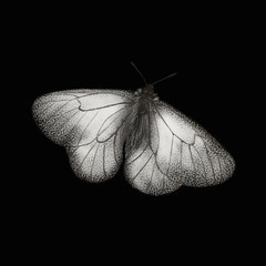 In de dag Vlinders in Grunge Realistic black and white single butterfly isolated on black background