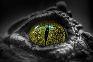 Deurstickers Krokodil Close-up of a Crocodile's Eye