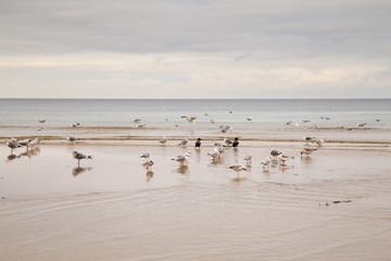 Jesienna plaża Sopot