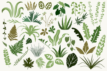 Set of flat green tropical leaves. Vector illustration. Retro style. Collection of plants. Botanical hand drawing