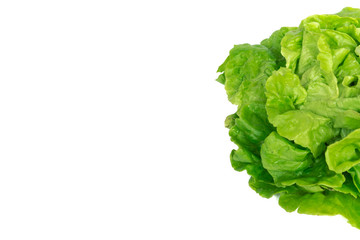 Studio shot close-up bright green Tom Thumb lettuce isolated on white