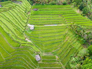 Foto op Plexiglas Pistache Aerial top view of rice terraces. Agricultural landscape of north Bali from drone. Jatiluwih Rice terraces UNESCO World Heritage. Bali, Indonesia. Travel - image.