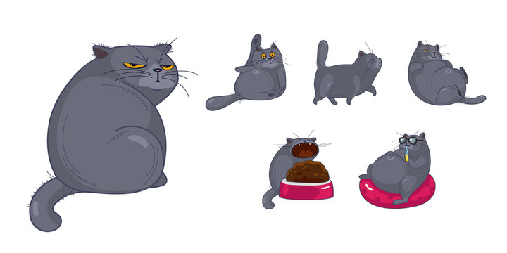Set of isolated cute British cats and kittens in different emotions and poses in cartoon style