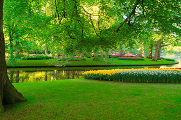 Wall Murals Green spring pond in park
