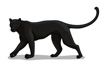 Panther big cat isolated in cartoon style. Educational zoology illustration, coloring book picture.