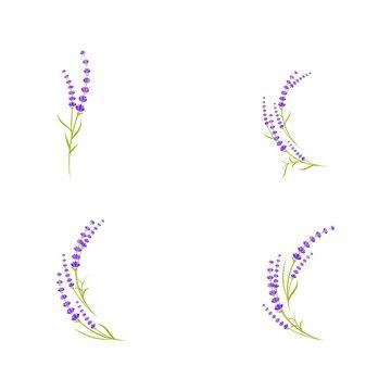 Lavender flower Vector icon illustration