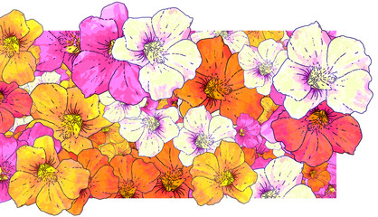 floral background with nasturtiums