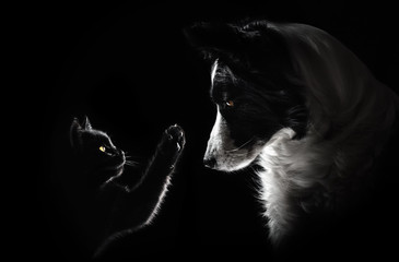 Photo sur Toile Chien cat and dog lovely portrait on a black background magic light friendship animal