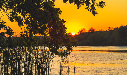Foto op Canvas Meloen Picturesque landscape with river and tree branch over water during sunset_