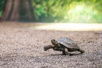 Fotorolgordijn Schildpad turtle step