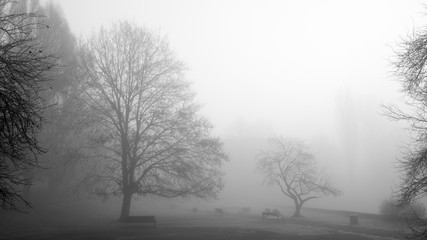 Mgła w miejskim parku