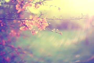 tender spring flowers background / beautiful picture of flowering branches