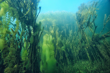 Foto op Plexiglas Groen blauw lake underwater landscape abstract / blue transparent water, eco nature protection underwater