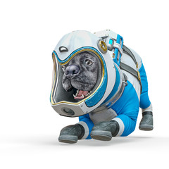 dog the astronaut is ready to play in white background