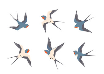Set of swallows birds in flight Fotomurales