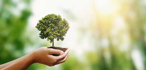 Wall Mural - woman hand holding tree on blur green nature background. concept eco earth day