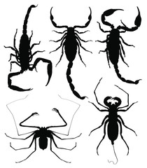 Scorpions silhouettes on wight background. vector illustration