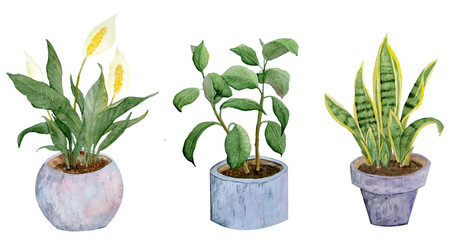 watercolor hand drawn illustration potted plants snake rubber peace lily mother in law tongue on white isolated background nature natural indoor interior flowers pastel neutral grey realistic green
