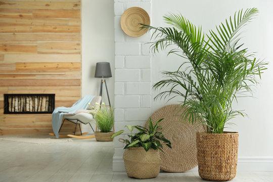 Houseplants in wicker pots on floor indoors. Interior design