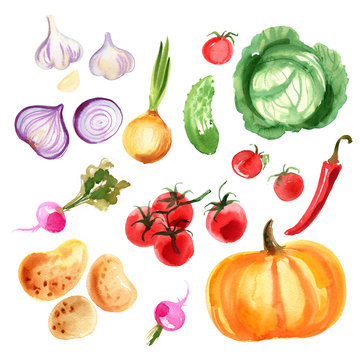 A colored sketch of vegetables. Paprika, chilli pepper, radish, eggplant, tomatoes, onion, cucumber, garlic painted with watercolor on a white background. Food picture