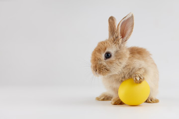 Easter bunny rabbit with egg on gray background