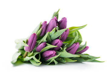 Bouquet of purple tulips isolated on white
