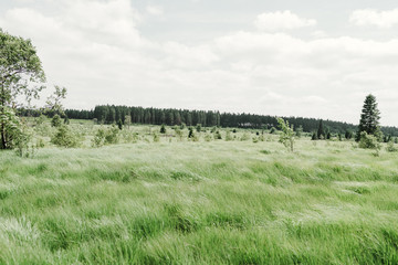 green grass field in nature