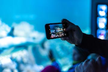 Whale shark in aquarium crowd take photo phone sharp focus bokeh blue