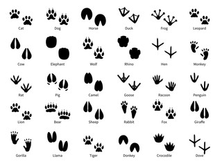 Animal footprints. Walking track animals paw with name, pets tracks, bird and wild animals trail, wildlife safari feet silhouette vector prints