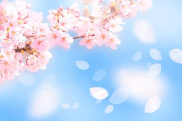 Türaufkleber Rosa hell 桜がふわふわ舞い降りる