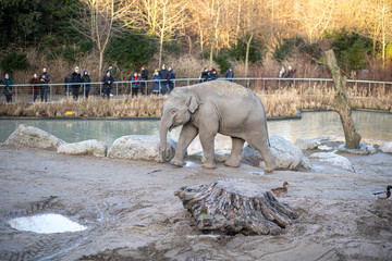 Elephant in Copenhagen Zoo