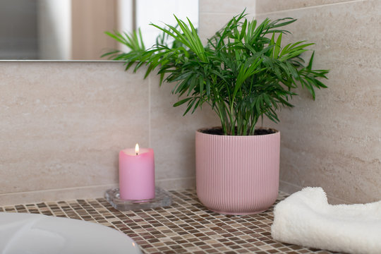 tropical potted plant Chamaedorea, candle and bath towel in the bathroom. Cozy home concept. horizontal image.