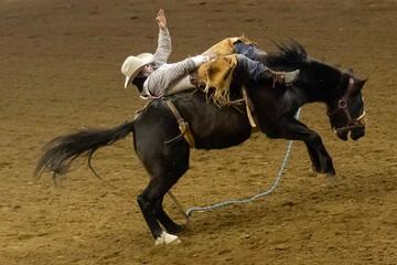 Rodeo rider on bucking bronco