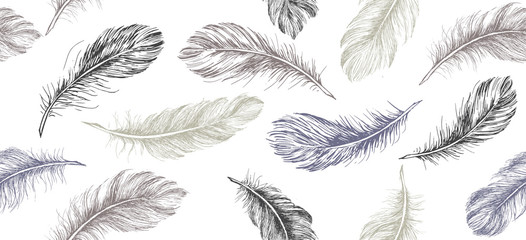 Canvas Prints Pattern Hand drawn feather on white background.