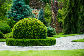 Fotorolgordijn Tuin boxwood bush ornamental garden design