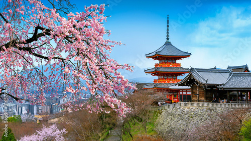 Wall mural Cherry blossoms and red pagoda in Kyoto, Japan.