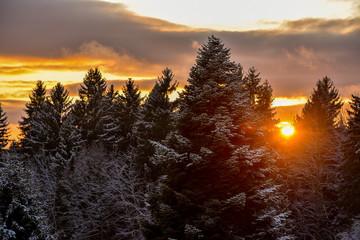 Wald Winter Sonnenuntergang mit Schnee