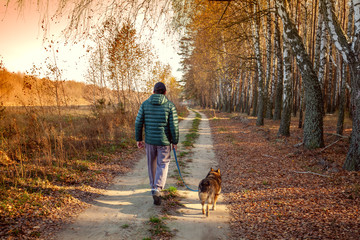 Photo sur Aluminium Bosquet de bouleaux A man with a dog is walking along a country road along a birch grove