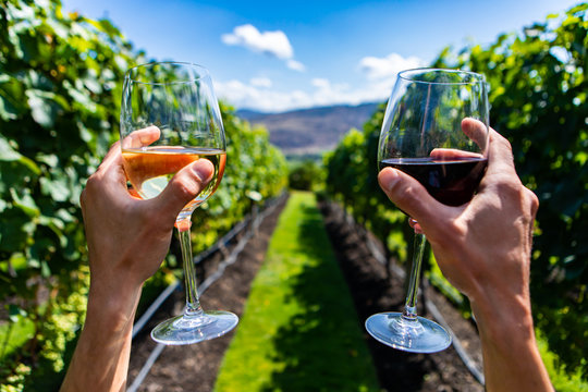 two hands cheering, holding red and white wine glasses selective focus close up view between vineyard grape vines green background, winemaking concept