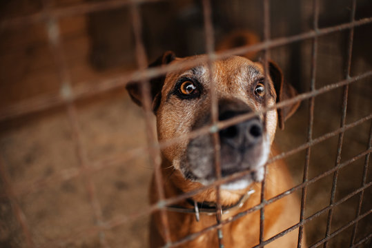 red mixed breed dog portrait in animal shelter cage