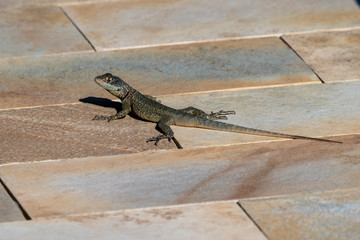 small green lizard full body picture